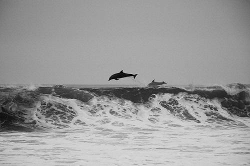北海道 イルカ 泳ぐ