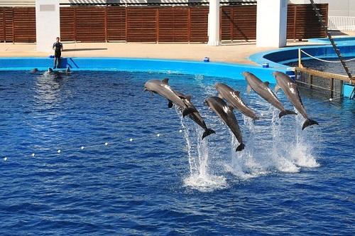 イルカ 水族館 問題