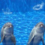 神秘的!イルカが水中でリングを作る
