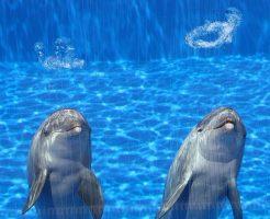 イルカ 水中 リング