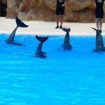 日本の水族館でのイルカの自然繁殖事情について知ろう!