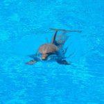 日本におけるイルカの問題