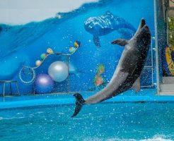 イルカ ジャンプ 種類