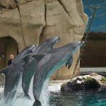 イルカは皮膚のしわを作って速く泳ぐ!