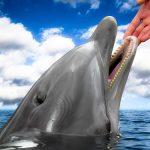 人が触るとイルカは火傷する?イルカの皮膚についてのお話
