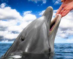 イルカ 触る 火傷