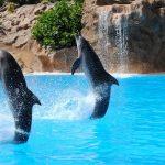 イルカの繁殖の研究