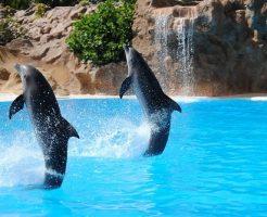 イルカ 繁殖 研究