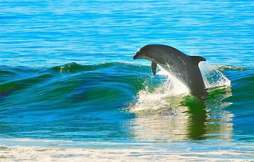 イルカ 種類 数