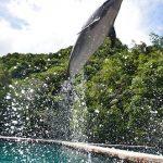 イルカとクジラの違いは!?