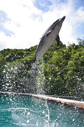 イルカ クジラ 違い 大きさ