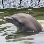 イルカの赤ちゃんの生態