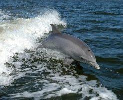 イルカ クジラ 同じ