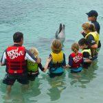 イルカと 泳ぐ事ができる奇跡の 島々