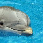 イルカの知能は人間に例えると何歳くらい?