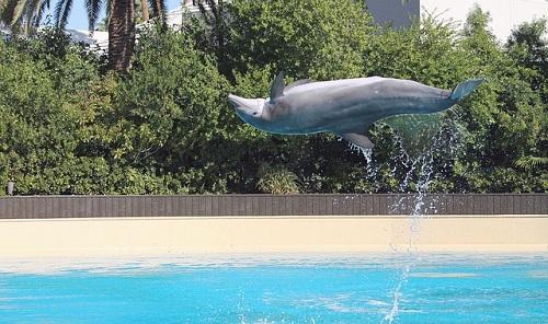 イルカ オスメス 見分け方