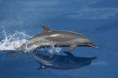 イルカ 寿命