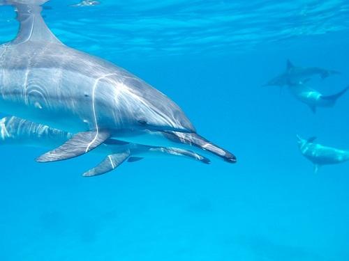 イルカ 群れ 移動