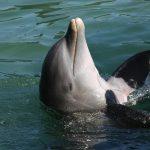 イルカが進化した理由とは?哺乳類なのに海に暮らすイルカの謎。