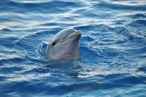 イルカ 意味 ハワイ