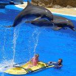 イルカの背びれが曲がる理由