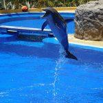 イルカの皮膚は乾燥するとどうなるのか?