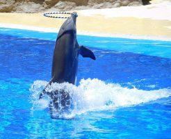 イルカ 水族館 ストレス