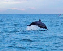 イルカ 助ける 夢