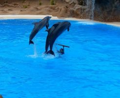 イルカ 水族館 寿命