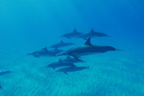 イルカ クジラ シャチ 違い