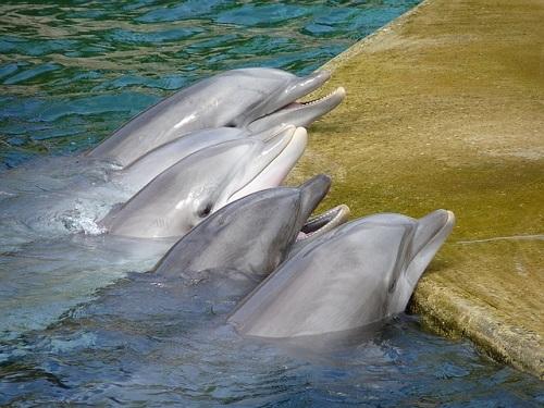 イルカ 飼育下 寿命
