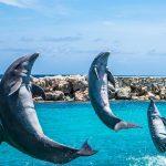 イルカの尾びれはどのように進化した?尾びれの力はどのくらい?