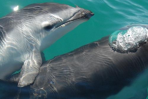 イルカ クジラ 哺乳類