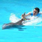 イルカを触る・助ける・泳ぐ・・夢で何かを告げている?夢占い