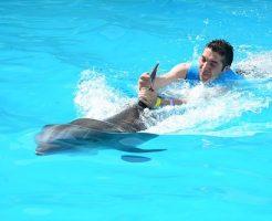 夢占い イルカ 触る 助ける 泳ぐ