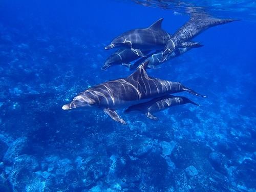 イルカ クジラ 打ち上げ 原因は