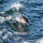 サメとイルカの速さは?