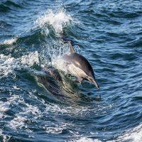 イルカ サメ 速さ
