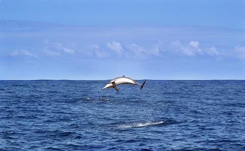 イルカ ジャンプ なぜ