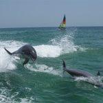 日本 で野生の イルカと 泳ぐ事は出来るのか?