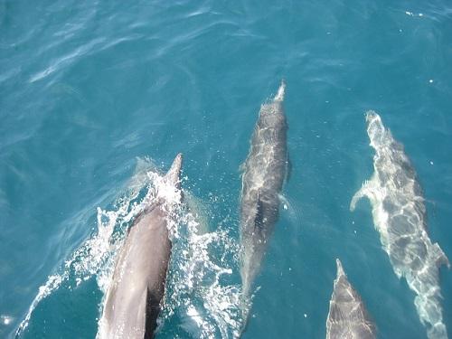 イルカ 群れ リーダー