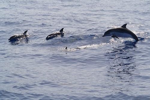 イルカ 泳ぐ 速さ