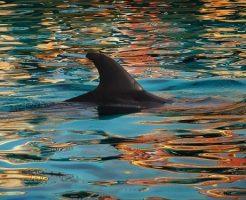 イルカ サメ 背びれ 違い