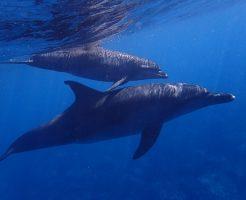 イルカ 群れ 生態