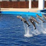 イルカを捕獲して展示する 水族館 が抱える問題