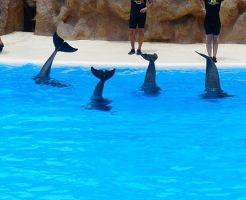 イルカ 水族館 繁殖
