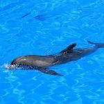 イルカの背びれの進化
