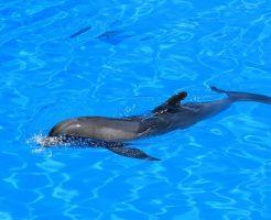イルカ 背びれ 進化