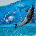 イルカのジャンプの種類