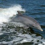 イルカの皮膚は水中での抵抗を受けにくくできている?